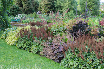 Border planted with moisture loving plants in the Wells Gardens including hostas, astilbes, heucheras and rodgersias