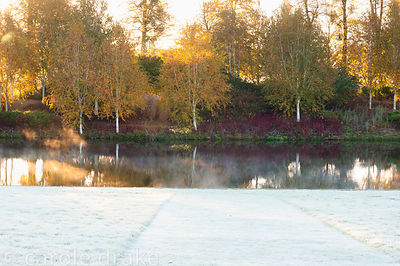 The Birkett Long Millennium Walk where white stemmed birches and red stemmed cornus reflect in the water of the Upper Pond at...