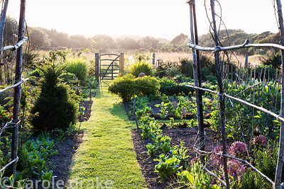 A grass path through the vegetable garden leads to a simple paling gate leading into the meadow at Sea View, Cornwall in June
