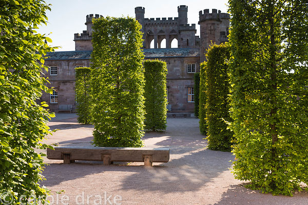 Stable Yard with clipped hornbeams at Lowther Castle, Penrith, Cumbria in July