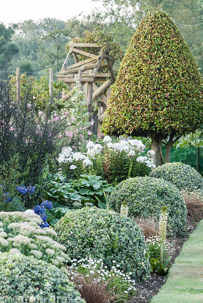 Border in the front garden features clipped variegated euonymus, and a clipped bay, interspersed with sedums, phlox, agapanth...