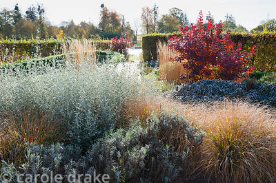 Planting in the walled garden at Marks Hall in autumn designed by Brita von Schoenaich including Teucrium fruticans, lavender...