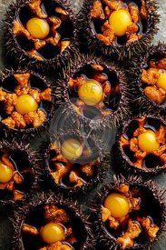 Fresh opened Sea Urchins with quail egg and soy sauce on plate on stone slate background