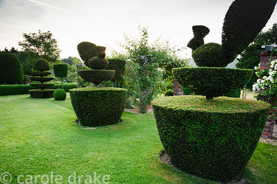 Topiary garden features yew clipped into peacocks and swans. Felley Priory, Underwood, Notts, UK