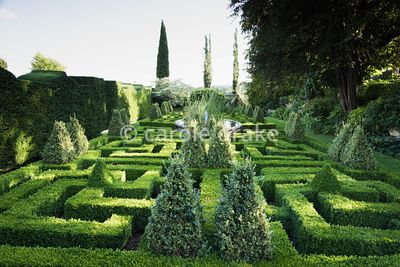 Knot Garden with clipped box hedging and variegated box pyramids at Bourton House, Moreton-in-Marsh in August