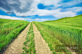 Field path in Tuscany - Europe, Italy, Tuscany, Siena, Val d'Orcia, Pienza, south of - digital - Getty image 103352526