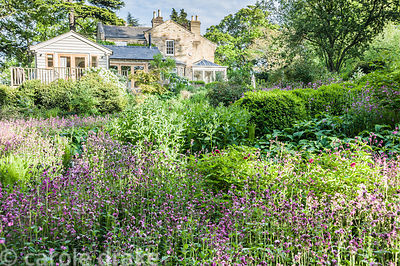 The dell garden below the house is a matrix of planting including Silene dioica, Phlomis russeliana, ferns, comfrey, euphorbi...