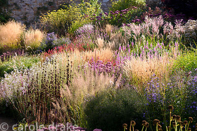 Herbaceous border stuffed full of grasses and late season herbaceous perennials including Calamagrostis brachytricha, Calamag...