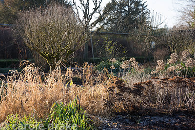 Seed heads of agapanthus and sedums and dry grasses catch winter sun in the Rose Garden at Mottisfont in January