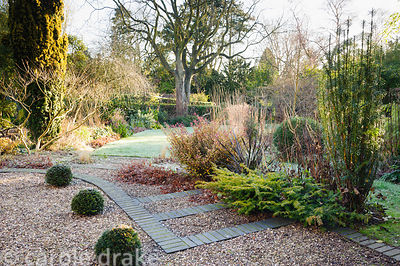 Grey bricks edge gravel steps in the front garden with clipped yew spheres and shrubs in surrounding beds including box, Pseu...