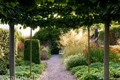 Pleached limes frame a bench on a gravel path surrounded by a prairie planting inspired mix of grasses and herbaceous perenni...