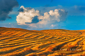 Corn field harvested - Europe, Italy, Tuscany, Siena, Val d'Orcia, Pienza, south of - digital - Masterfile image 600-01670528