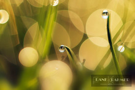 Grass with dewdrops - Europe, Germany, Bavaria, Upper Bavaria, Munich, Taufkirchen - digital