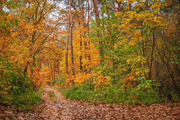 Narrow path into autumn forest