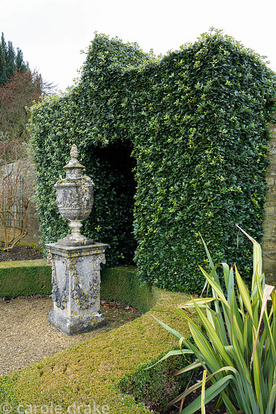 A grand arch of holm oak, Quercus ilex, forming a setting for an ornamental urn in the garden at Bourton House in the Cotswol...