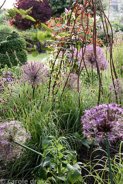 Decorative metal plant support surrounded by Allium cristophii and Pennisetum 'Red Buttons' at Malthouse Farm, Hassocks, Sussex