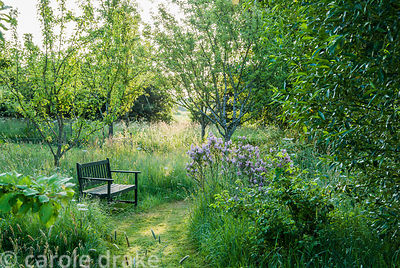Meadow area with seat and lilac. Ivy Croft, Leominster, Herefordshire, UK