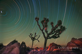 Starry sky and Joshua tree (long exposure) - North America, USA, California, San Bernardino, Joshua Tree National Park, Jumbo...