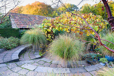 Sunken garden with pots of Chionochloa conspicua and a vine covered arbour over a dining area at Barn House, Chepstow in October