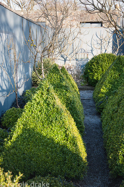 A gravel path runs between clipped box topiary in the kitchen garden, surrounded by grey painted walls against which trained ...
