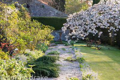 On the sundial terrace the sundial is framed by blossom of Prunus 'Taihaku', the great white cherry. The border is planted wi...