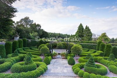 Parterre at Bourton House, Moreton-in-Marsh in August with clipped box and yew and standard Portugese laurels.