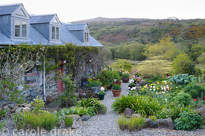 The Courtyard Garden full of pots of bright tulips and the fresh leaves of herbaceous perennials.