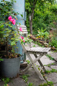Folding chair near the roses