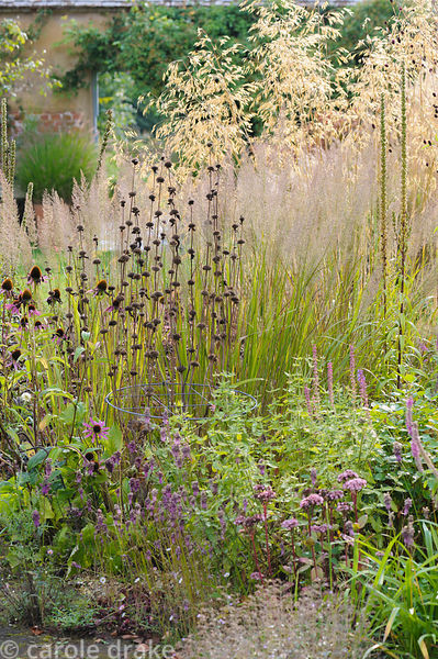 Phlomis seedheads with fluffy Calamagrostis brachytricha, Stipa gigantea and Allium carinatum subsp. pulchellum