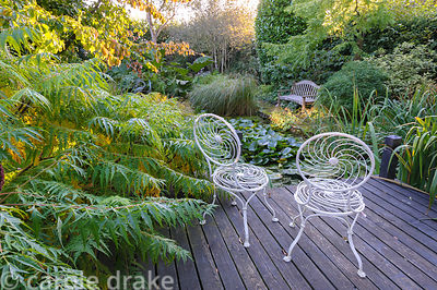 White metal seats on decking beside the pond in the back garden surrounded by lush foliage including  Rhus typhina, Parrotia ...