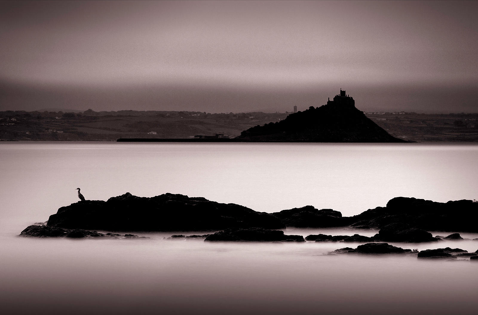 Cormorant and St Michael's Mount |  Penzance | 2015