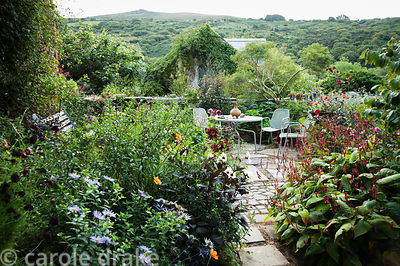 Seating area in the front garden is surrounded by pots of dahlias, persicaria, salvias, Aster frikartii 'Monch' and eryngiums...