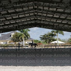 cheval-ambiance-150201-5100