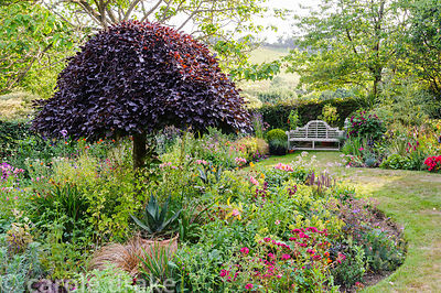 Lower garden has a striking clipped copper beech at the centre of a bed planted with a pretty mix of herbaceous perennials in...