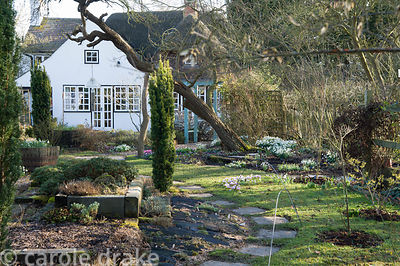 Back garden with fastigiate yews and clumps of snowdrops and other early spring bulbs.