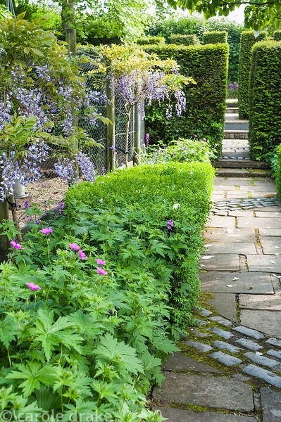 Path with curving cobble inset leads past the chicken run decorated with standard wisterias underplanted with hardy geraniums...