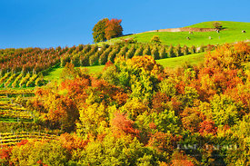 Cultural landscape with wineyard and deciduous forest in autumn colours - Europe, Italy, Trentino-Alto Adige, South Tyrol, Ka...