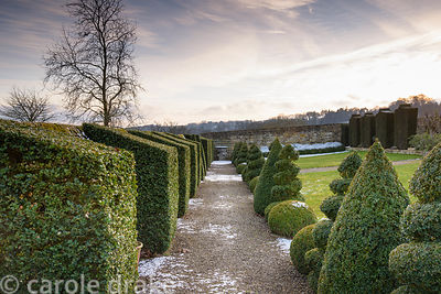 Box topiary balls, spirals, cones and buttresses at Bourton House garden in the Cotswolds in January