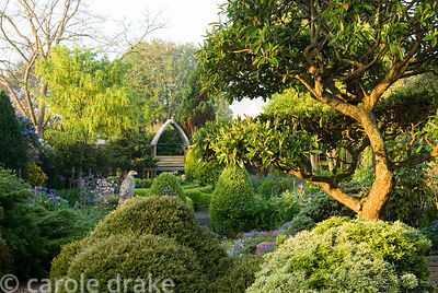 Shaped evergreens frame the entrance to the main part of the garden with clipped cotoneaster tree on the right. 24 Bude Stree...