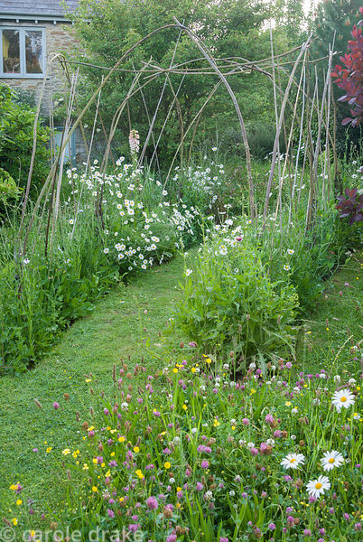 Hazel structure supporting sweet peas in meadow area dotted with ox-eye daisies and clovers. Private garden, Dorset, UK