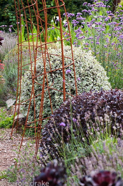 Rusty steel arches in the Rickyard surrounded by clipped pittosporums, lavender and Verbena bonariensis. Dyffryn Fernant, Fis...