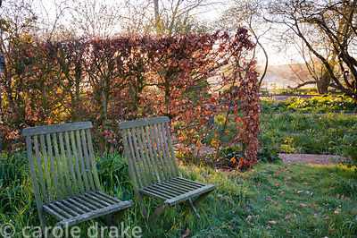A pair of wooden garden seats in long grass framed by a beech hedge. Terstan, Stockbridge, Hants, UK