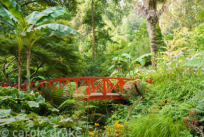 Red bridge flanked by bananas, Musa basjoo, lush foliage of ferns and orange daisies of Ligularia dentata 'Desdemona'. Abbots...