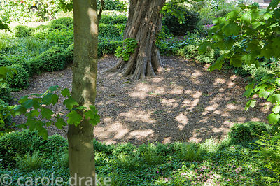 Circular area below a mature horse chestnut tree in the dell  is cleared of plants and surrounded by clipped box.