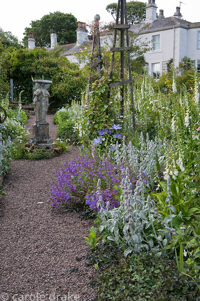 Gravel path through the formal garden full of self seeded foxgloves, silver stachys, penstemons and clematis climbing up wood...