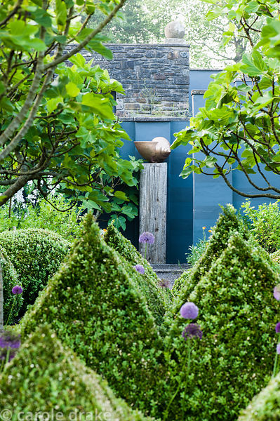 The kitchen garden is dominated by four standard fig trees surrounded by clipped box pyramids interspersed with Buxus microph...
