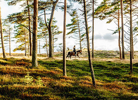 Woman riding horse in Thy, Denmark 4