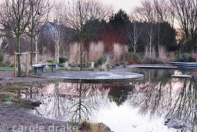 Natural swimming pool surrounded by grasses, willows, white stemmed birches and cornus at Ellicar Gardens, Notts