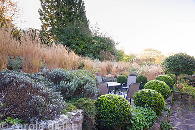 Seating area at the base of a terraced slope is surrounded by clipped box, lavender and grasses including Calamagrostis x acu...