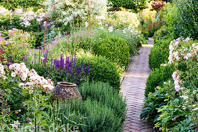 Herringbone brick path runs between borders full of shrubs and herbaceous perennials including teucrium, Salvia nemerosa 'Car...